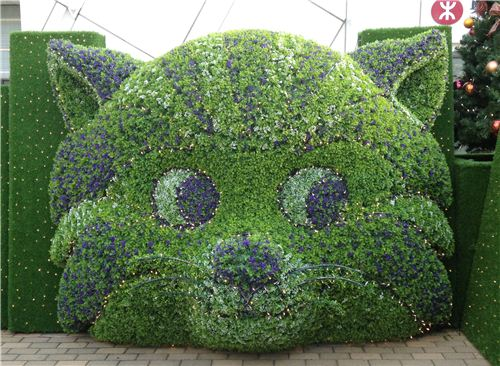 A crazy Cheshire Cat bush