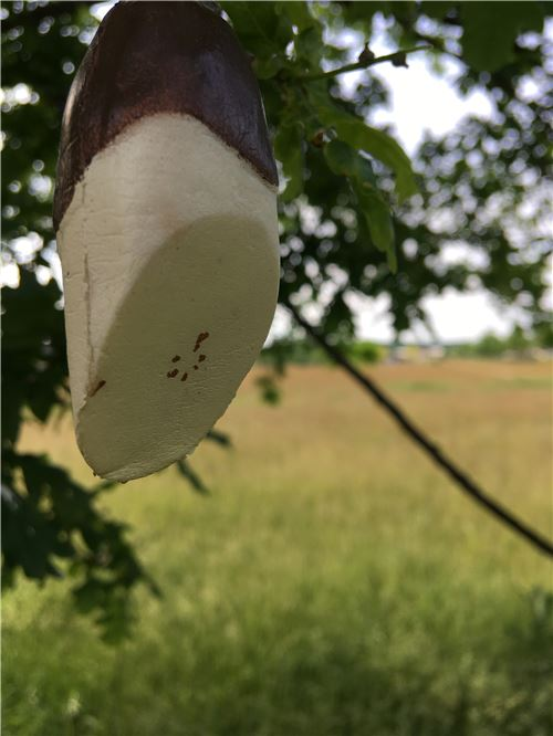 Look! This tree is growing a chocolate dipped banana squishy!