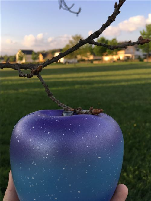 A tree that grows galaxy apples??