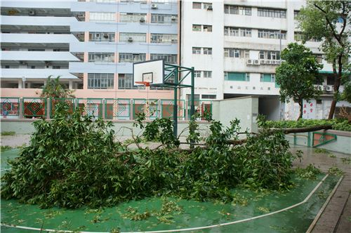 Lots of trees fell down on this basketball court opposite to our building