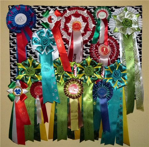 Our Italian customers Ross E Cris Petrilli used our dachshund fsbric on canvas to display their dog's prize ribbons